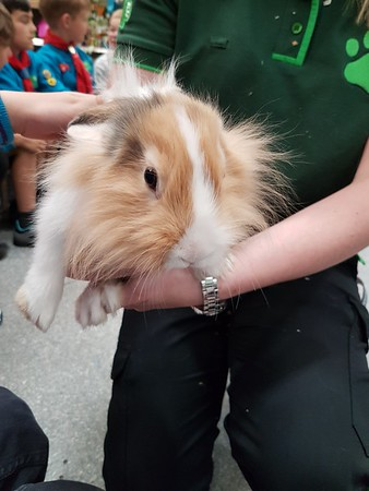 2018-06-15 Beavers Visit Pets at Home