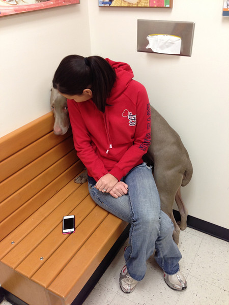 The moment the door opened and the tech came in, she hid behind me....how ridiculously pathetic?!  She used to love the vet but ever since the stitches, she's terrified =(  We decided to take Yadi to the vet to make sure her incision is healing properly (because she's been so rough on it and we can't keep her off of it and calm for 2 weeks.  I mean, seriously...she's a one and a half year old Weimaraner!  It's impossible)  {January 04, 2013}