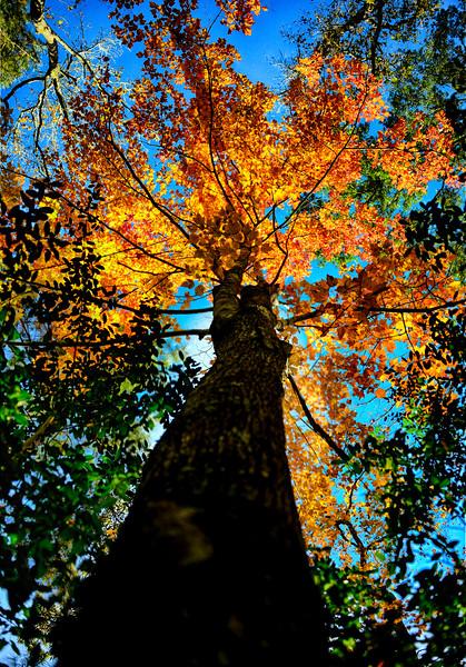 z Fall Colors.jpg