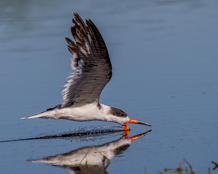 Skimming