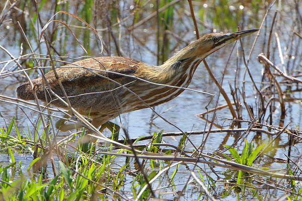 2019-04-17 Riverlands Migratory Bird Sanctuary