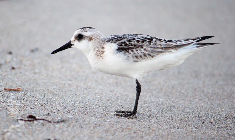 beach bird-2.jpg