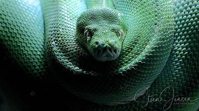 Reptilia; Reptiles; Krybdyr;