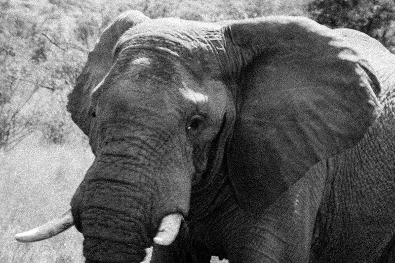 SouthAfrica-95.jpg