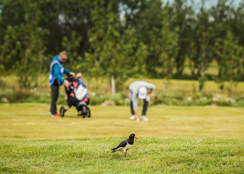 Fugl við 12. flöt á Garðavelli.  Mynd/seth@golf.is