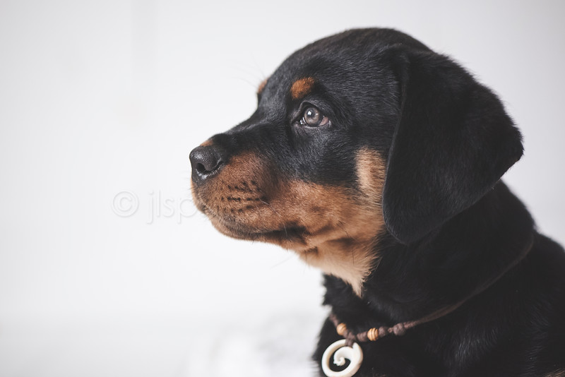 JLS_Pet Photography_035.jpg