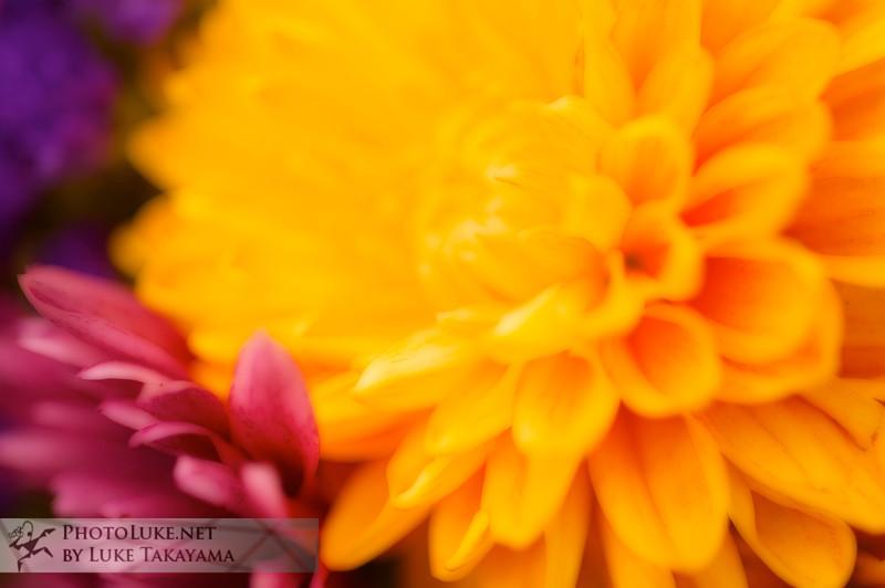 Flowers DSC_1718 copy.jpg