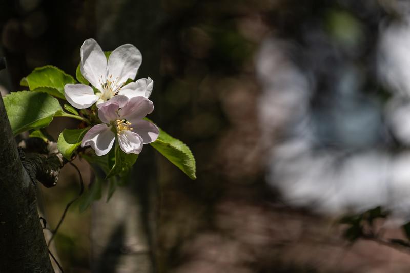 Nana's garden 24 Apr 2020-5.jpg