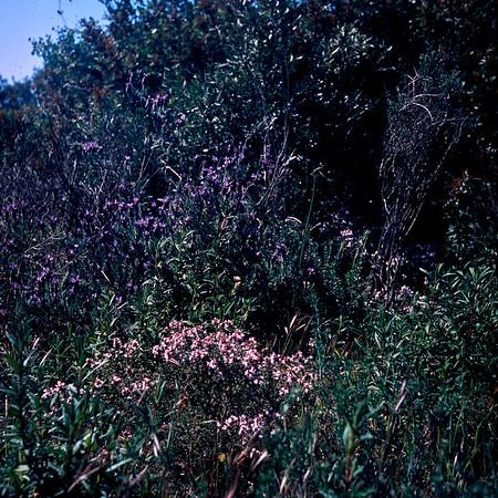 Spring in Roquebrun 2020