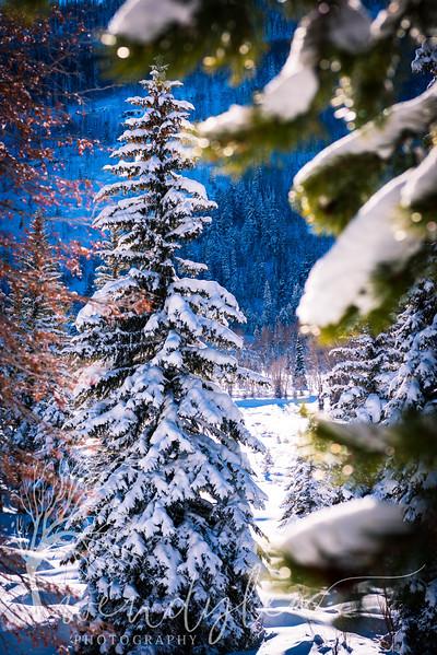 wlc mirror lake hwy 010617-48.jpg