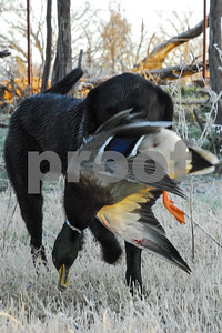 waterfowlers-help-pay-for-ducks-on-nesting-grounds-and-in-texas