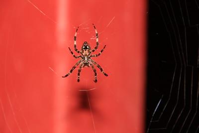 Spider 20150807