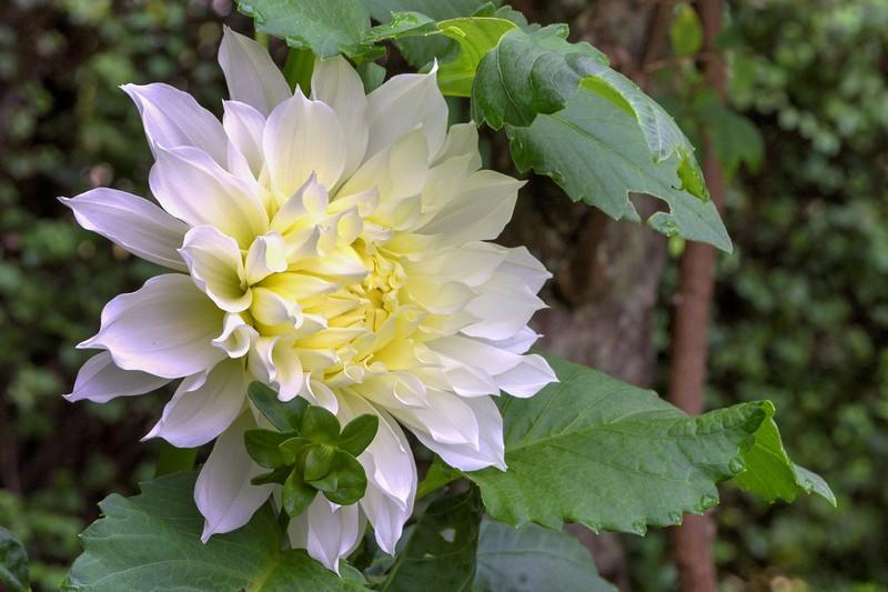 Garden 1, 240.jpg