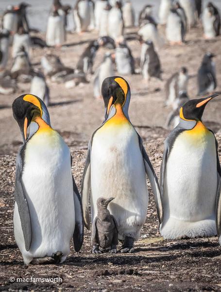 antartica-4.jpg