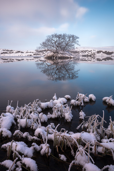 Myvatn lone tree island iceland landscape photography.jpg