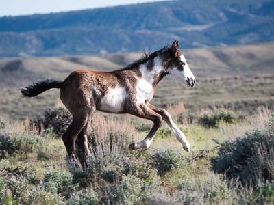 Foals, Young Fillies & Colts