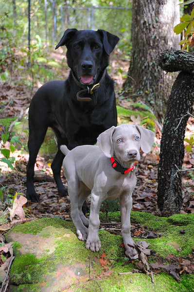 Kenai and Denali Oct 2009.jpg