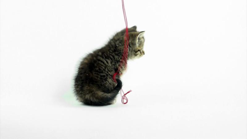 Kittens_tabby_024.mov