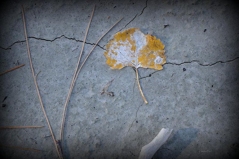 bridge 10-27-2012.jpg