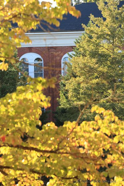 Fall afternoon on campus.  Clemson University