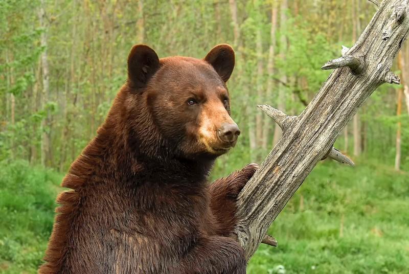 Bears-42.jpg