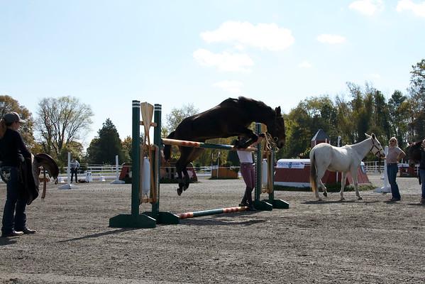 Coon Jumping At Fairhill International