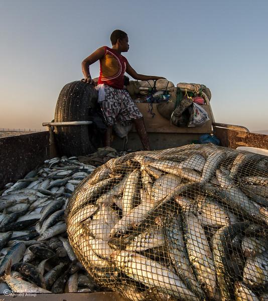 Sardine Season (27)- Dhofar.jpg