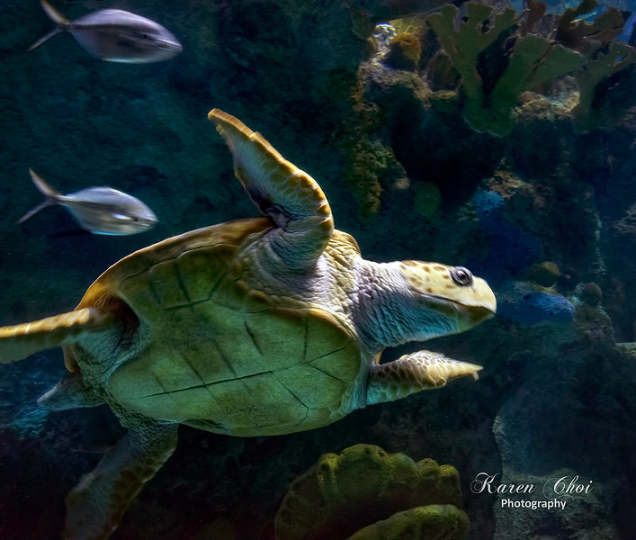 Turtle 2 sm.jpg