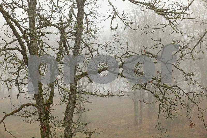 Oak branches 5634c.jpg