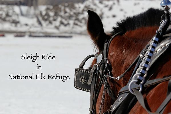 Elk Refuge Sleigh Ride - March 9, 2012
