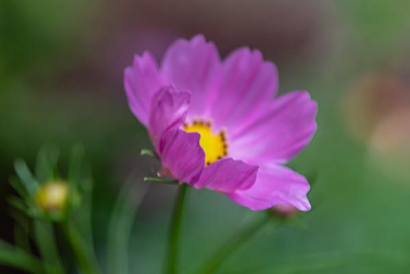 2021 July Flower Garden