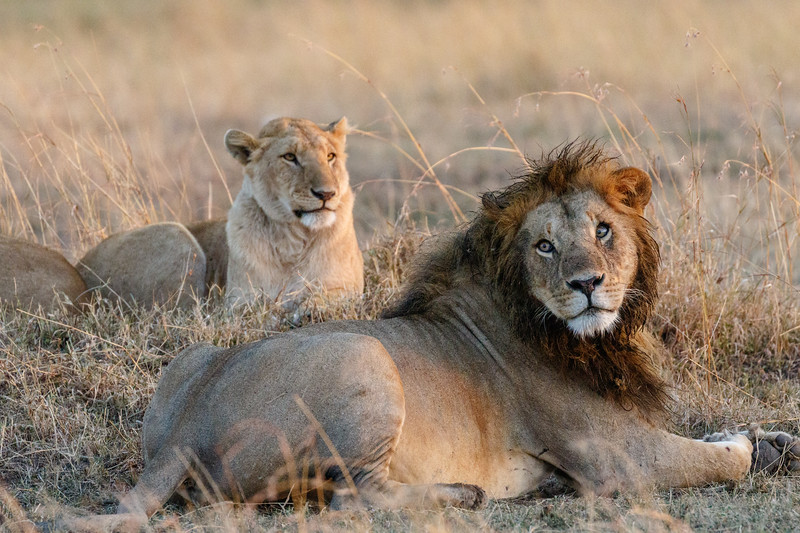 Kenya 2015-04059.jpg