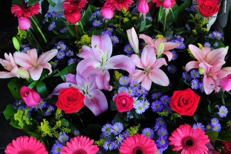 FlowerRows_6713.jpg