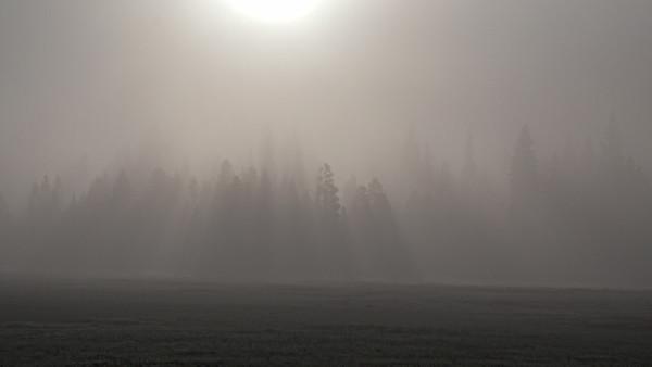 Yellowstone Trips