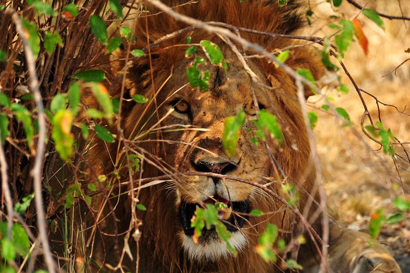 Africa 2010-083.JPG