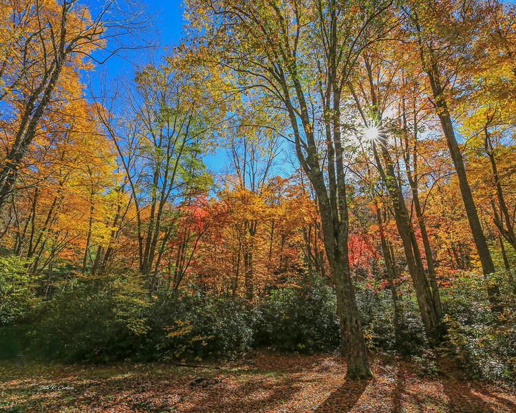 Fall Highlights