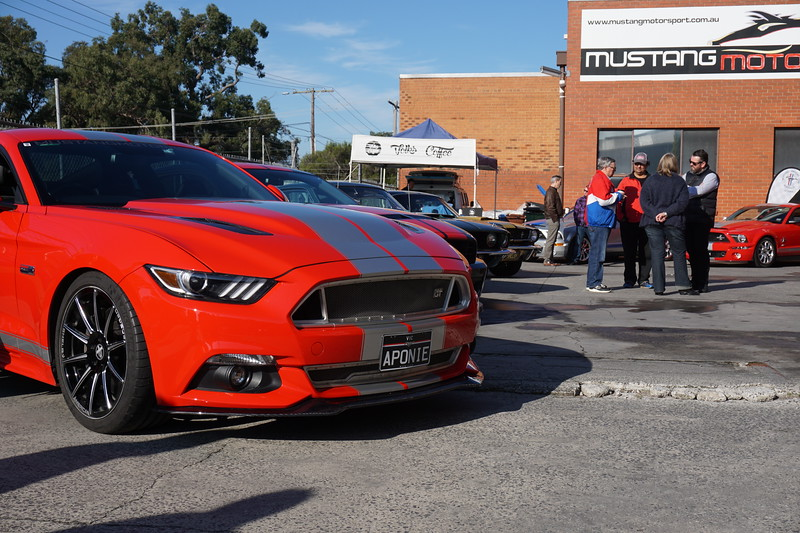 SHELBY GT CSM:16SGT0705
