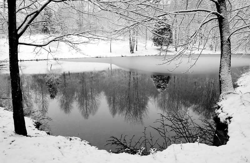 Overcast landscape with pond reflection. Black contrast in the trees and white snow without a blue tint..jpg