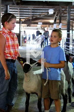 2012 Tipton County - Sheep
