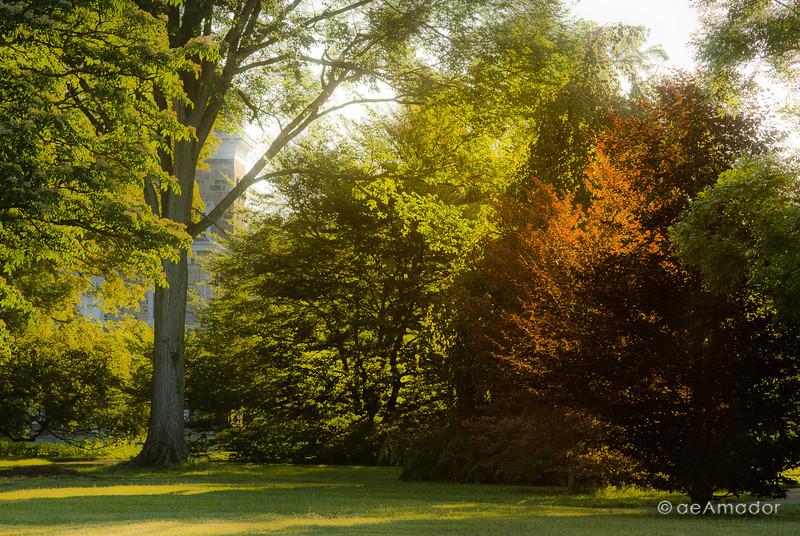 Cylburn Arboretum-aeamador-0065.jpg