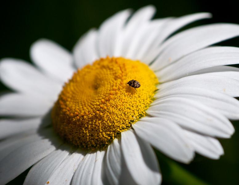 Nature Web portfolio (5 of 47).jpg