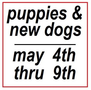 NEW & PUPPIE may 4th - 9th (not done)