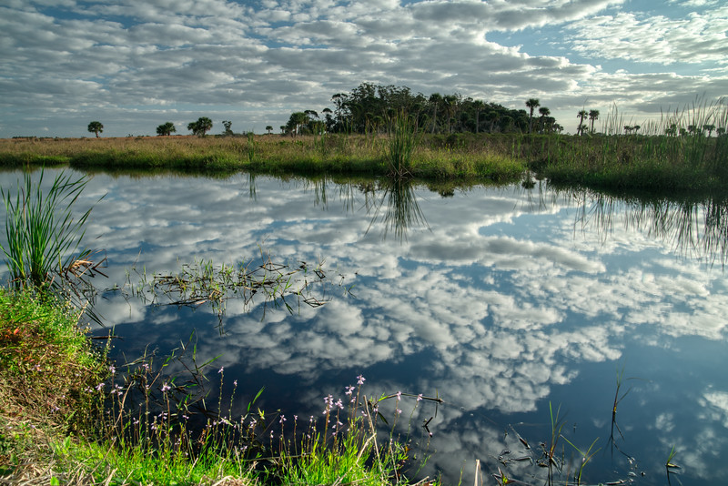 Florida Prairie 2020-6.jpg
