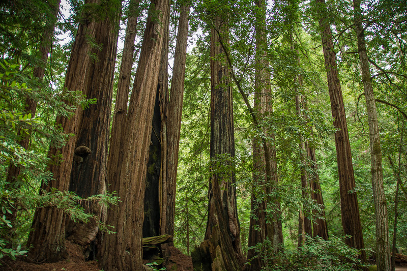 Redwood-3.jpg