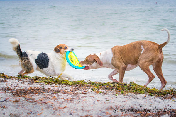 20141007dogs_fort_desoto_beach_Stephaniellenphotography.com-_MG_0176-Edit.jpg