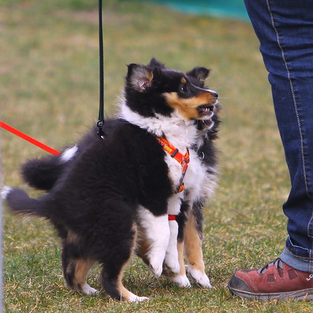 Images from folder 2013-04-07 Agility DVS