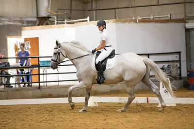 Horse 160