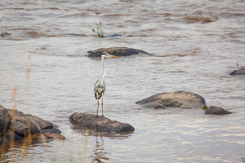 North_Serengeti-74.jpg