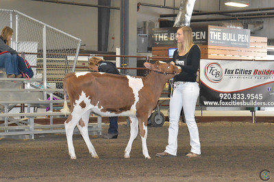 Wisconsin Spring Red & White Heifer Show 2018