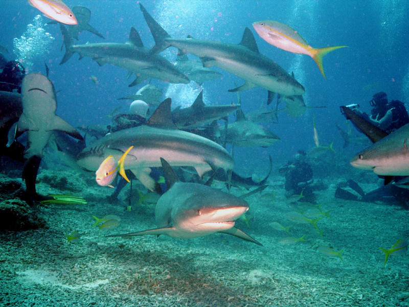 Shark 10.JPG